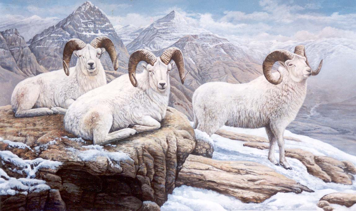 3 Ram Dall Sheep