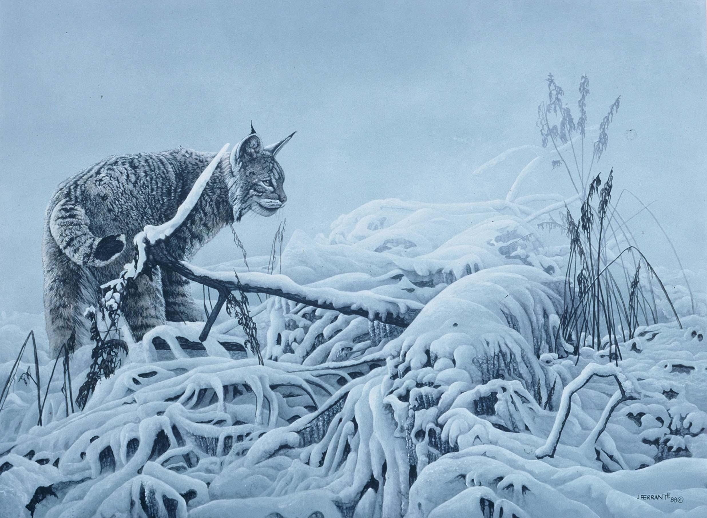 After the storm- bobcat