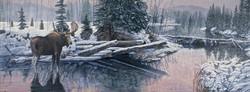 First snowfall bull moose