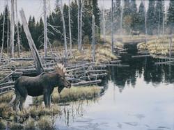 Secret admirerer moose