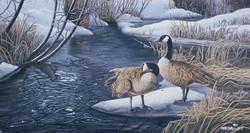 Canada geese at Macmillan Creek
