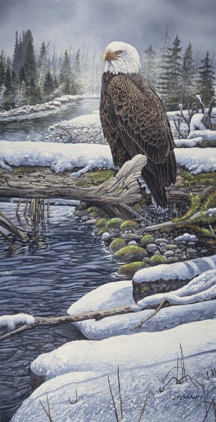 Bald eagle at creek