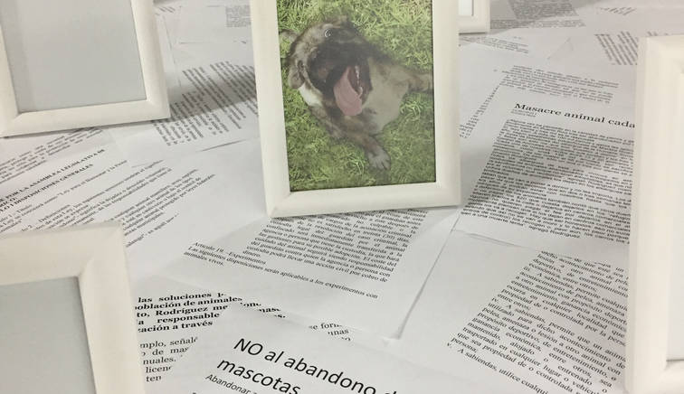 Statistics II (Nando), 2016 Project with a dog shelter organization in Cabo Rojo, Puerto Rico. Photographs, frames, dog collars and bird cage. 205.74 x 238.76 x 50.8 cm. 81 x 94 x 20 inches