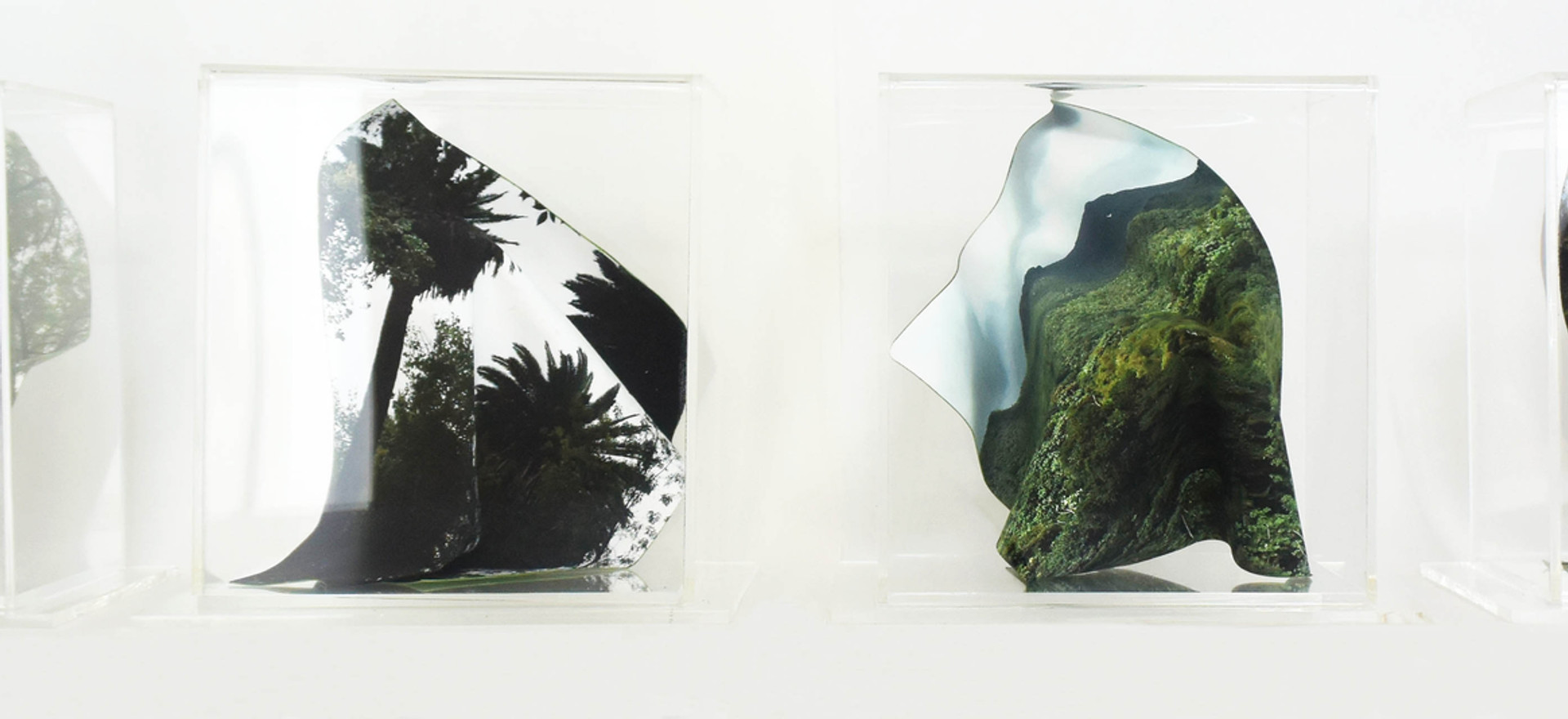 Biodiversity I, II, III, IV, 2018 Photographic sculptures in Hahnemüle Photo Matt Fibre paper with acrylic base and cover. 6.29 x 7.08 x 7.08 inches each. 16 x 18 x 18 cm. each.
