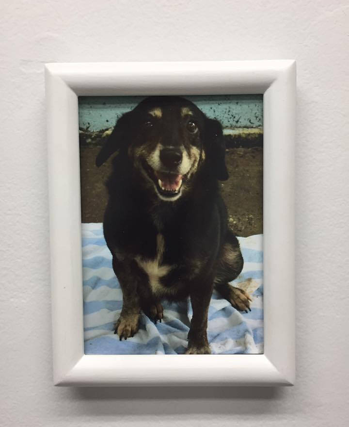 Statistics II (Nando), 2016 Project with a dog shelter organization in Cabo Rojo, Puerto Rico.Gretchen, being offered for adoption.