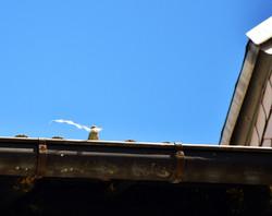 Der Spatz auf dem Dach
