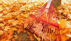 Majestic Leaf Cleanup