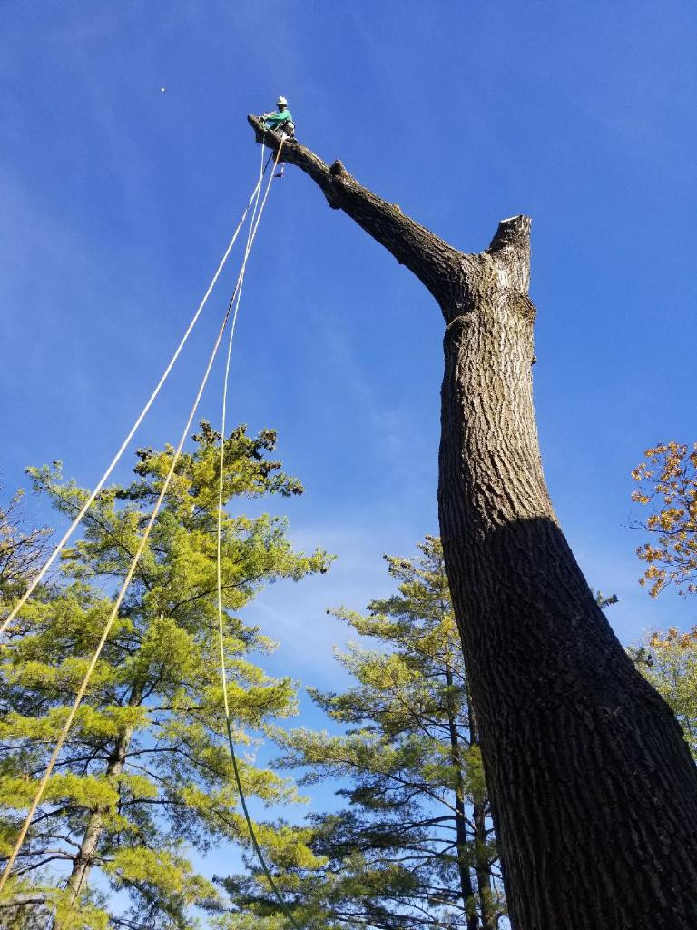 Majestic Tree Trimming