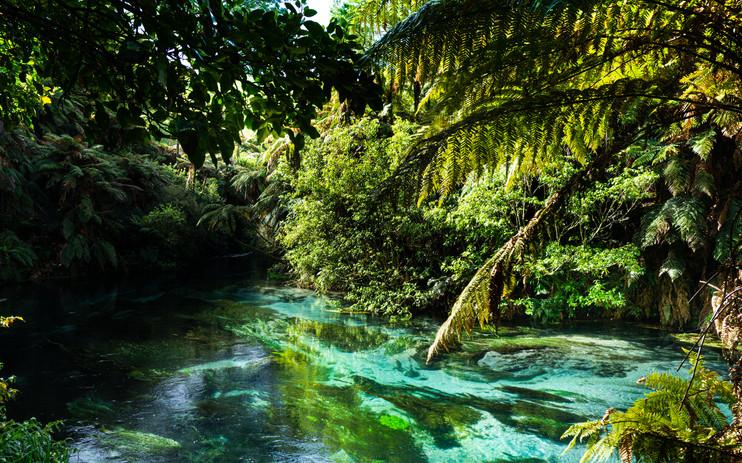 Blue Springs Putaruru