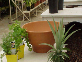 Friendly Container Gardening