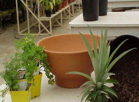 Friendly Container Gardening