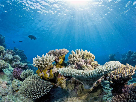 Protecting Our Reefs