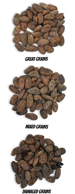 grains-rhys-psd-vertical.jpg