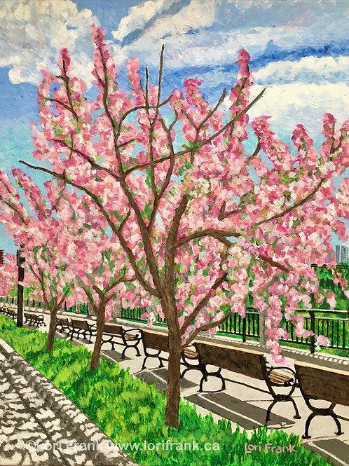 Cherry Blossom Way, Victoria Promenade