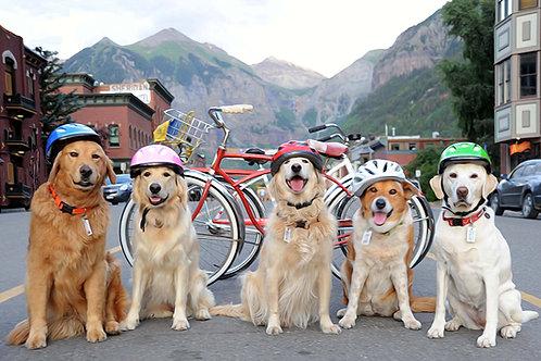 RUFF Riders