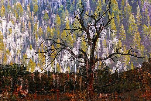 Mountains to Desert Trees
