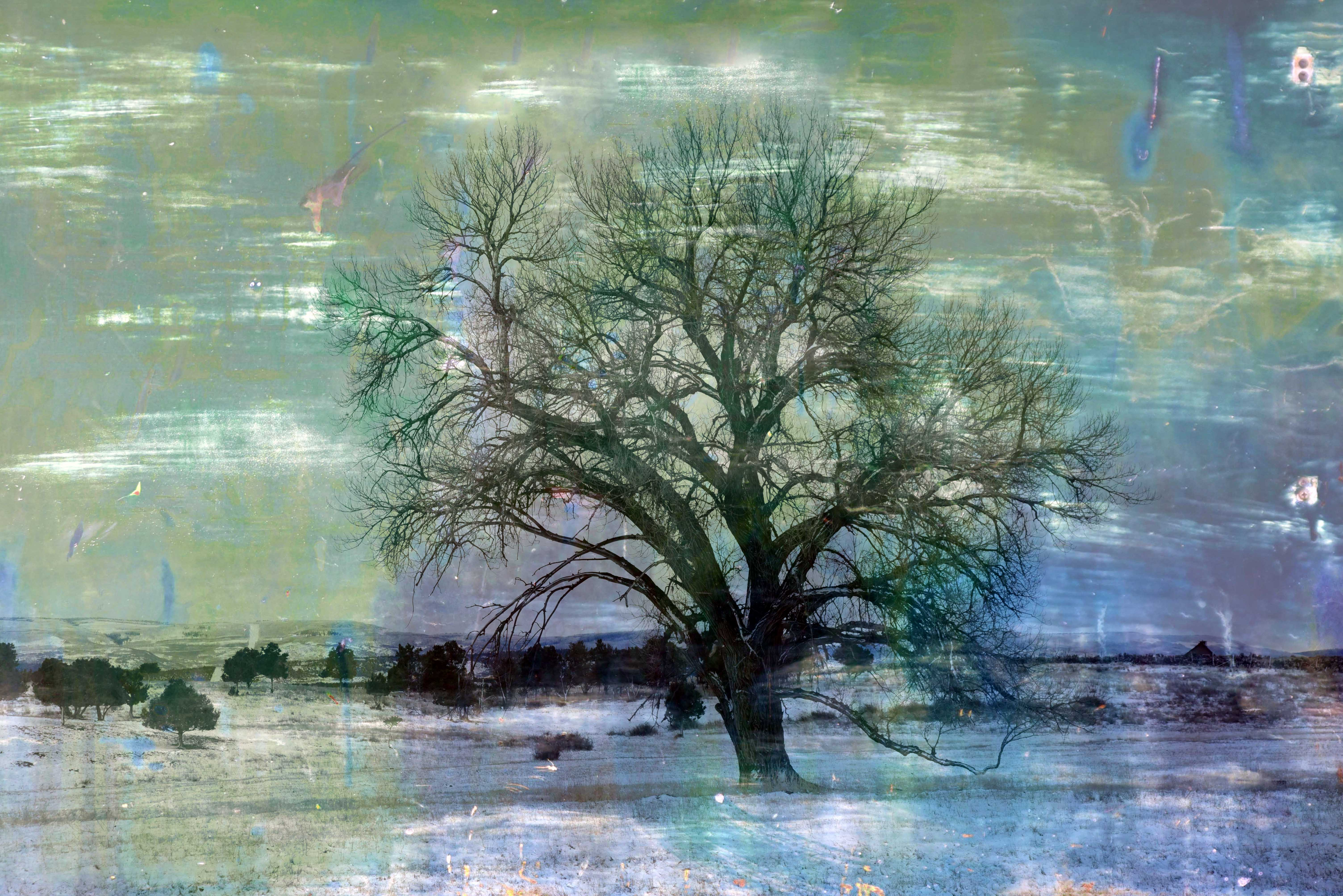 7 UP Tree