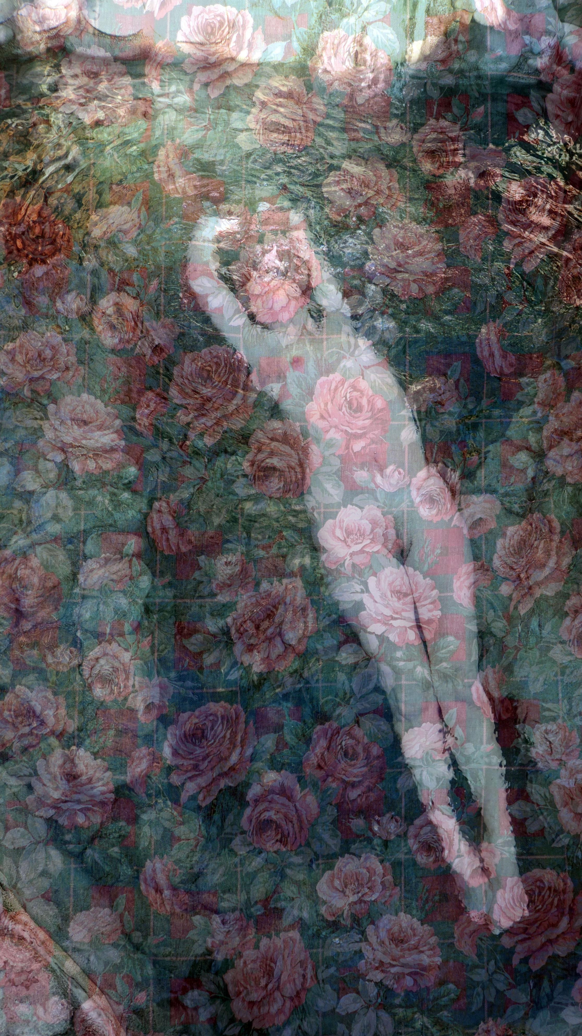 Lorelei Roses