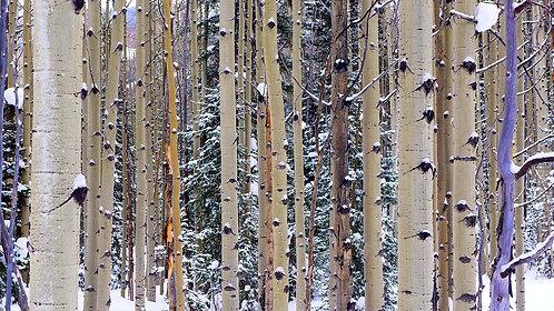 Priest Trees