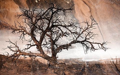 Navaho Rocks Tree