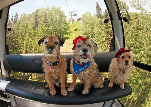 Terrier Trip