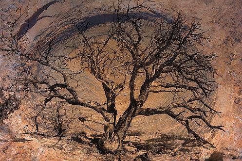 Oval Tree