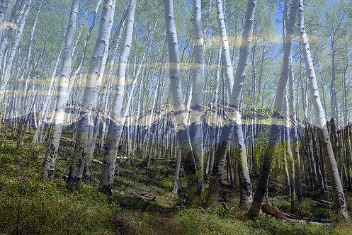 Wilson Trees