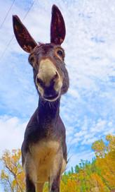 Eeore Donkey