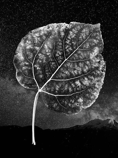 BW Leaf
