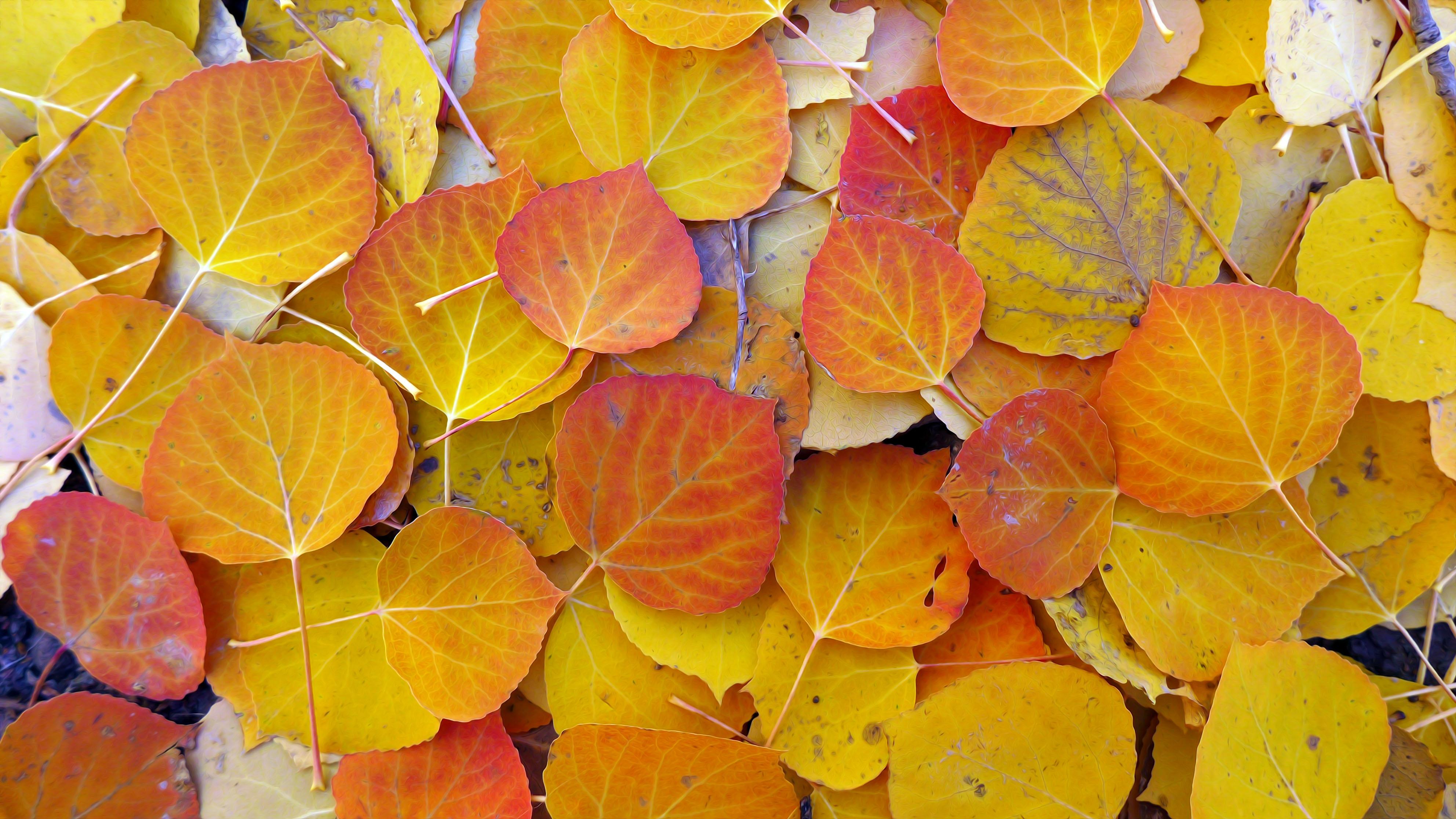 leaves_L1010543