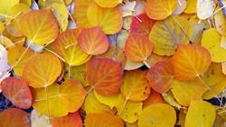Tomboy Road, Fall Leaves