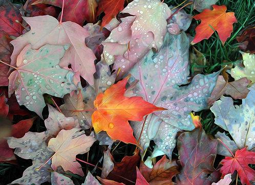 Maple Leaves 1