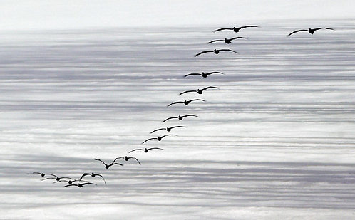 Flight of the Seabirds