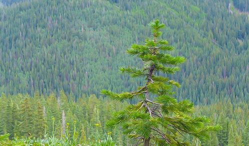 Tree Backdrop