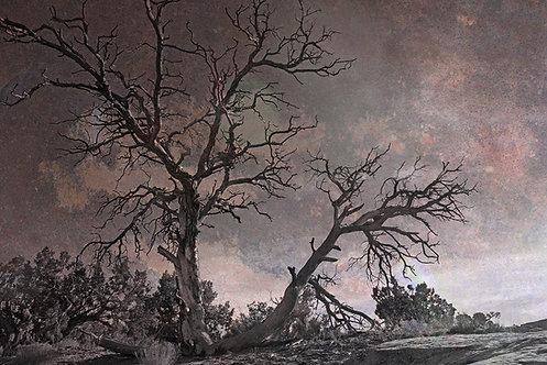 Cloud Lichen