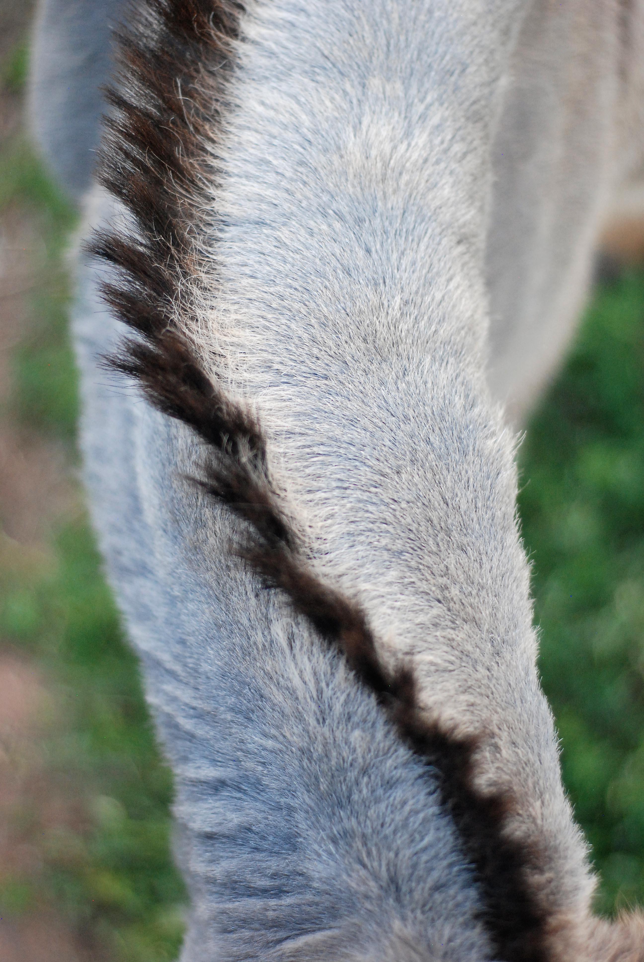 Mule Trail