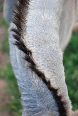 Donkey Hair