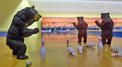 Bears, Beers and Bowling