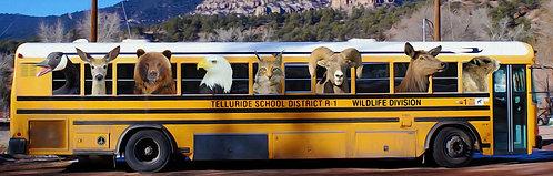 Wildlife Division