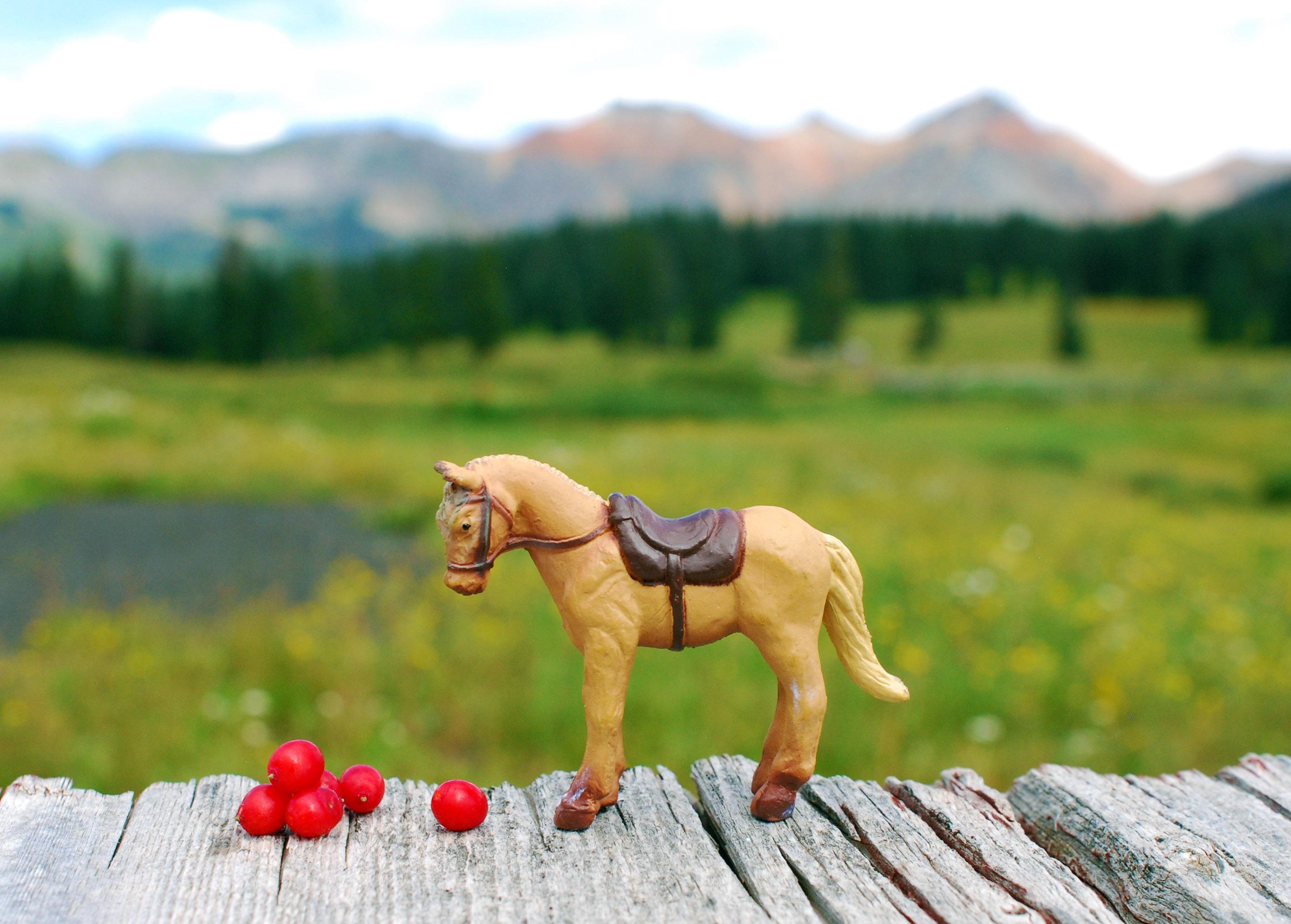 aa_horseberries
