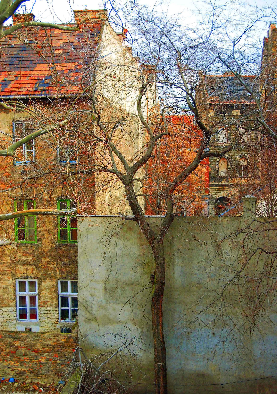 Budapest Tree