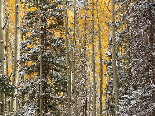 Bear Creek Fall Trees