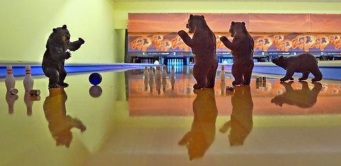 Bears, Bears and Bowling
