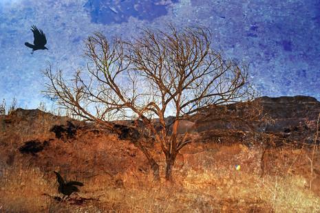 Cane Creek Tree