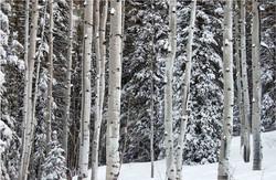 Bear Creek Trees