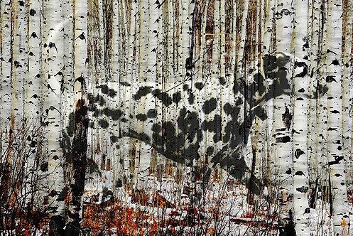 Doolittle Dalmatian