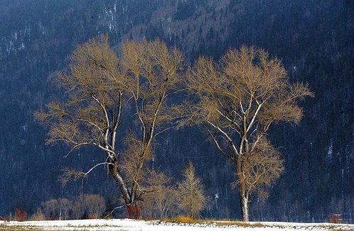Glowing Valley Floor Trees