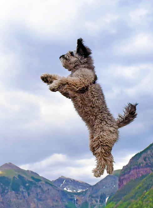 Cinder Jumps
