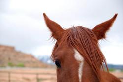 Moab Horse