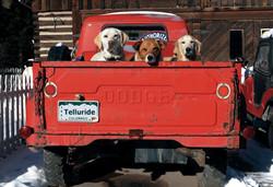 Red Dog Dodge